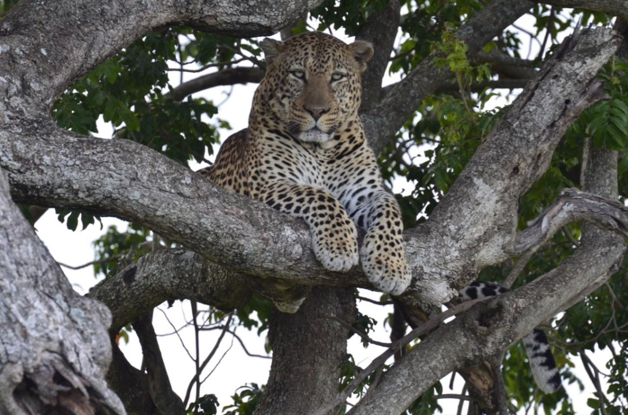 tegulia_camp_wildlife