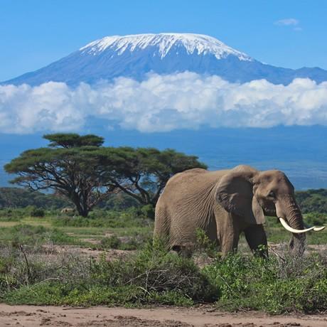 10-day-kilimanjaro-climb