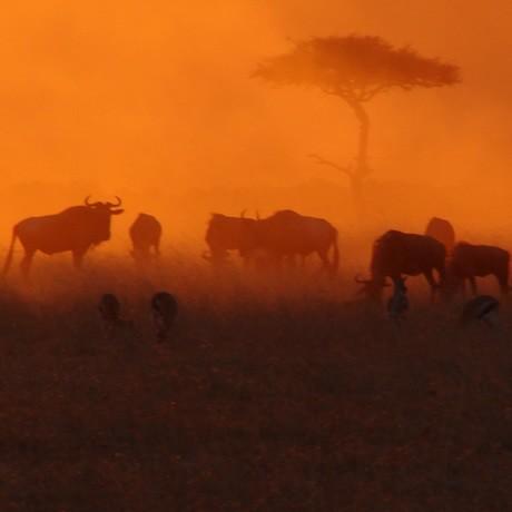 kenyan-safari-july-2018